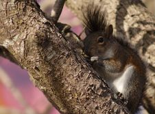 Free Squirrel Stock Photos - 560563