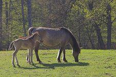 Free Horses Royalty Free Stock Photos - 560618
