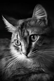 Free Cat In Black Stock Photos - 561093