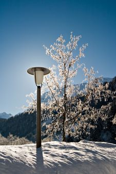 Free Lamp Post And Tree Stock Images - 561094