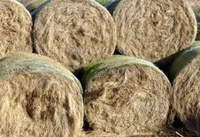 Free Hay Bales Royalty Free Stock Photography - 561277