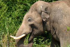 Free Elephant Stock Photos - 561593