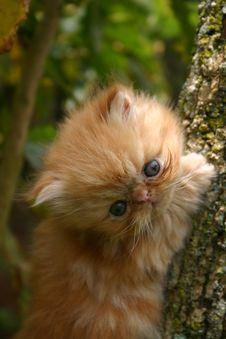 Kitten In The Tree Stock Image