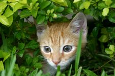 Cat In The Grass Royalty Free Stock Photo