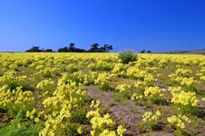 Free Springtime Coastal Meadow Royalty Free Stock Image - 561866