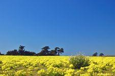 Free Springtime Coastal Meadow Royalty Free Stock Images - 561869