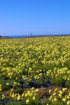 Free Springtime Coastal Meadow Royalty Free Stock Image - 561956