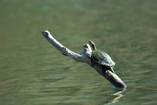 Free Turtle On A Log Stock Photos - 562133