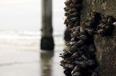 Free La Jolla Shores Sea Shells Royalty Free Stock Photo - 562175