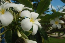 Free Tropical Flowers Group III Stock Image - 562241