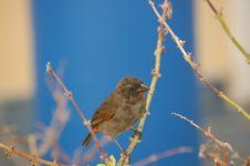 Free Bird In Caribbean Stock Photo - 562310