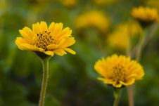 Free Spring Stock Image - 563131