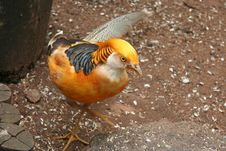 Free Bird Royalty Free Stock Image - 563806