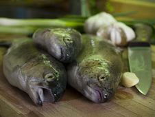 Free Three Fresh Fishes Stock Photos - 564033