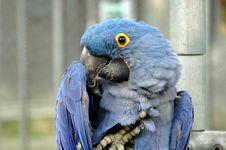Free Blue Bird Stock Photos - 564423