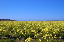 Free Springtime Coastal Meadow Royalty Free Stock Images - 564849