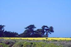 Free Springtime Coastal Meadow Stock Image - 564851