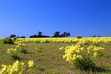 Free Springtime Coastal Meadow Stock Photography - 564852