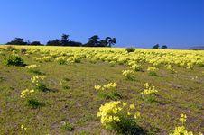 Free Springtime Coastal Meadow Royalty Free Stock Photography - 565007