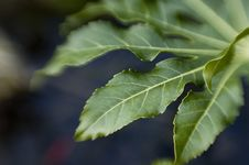Free Leaf Royalty Free Stock Photography - 565467