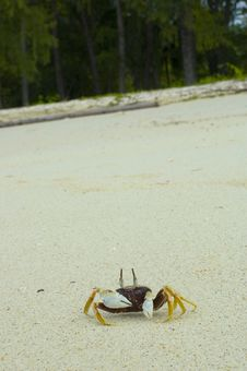 Free Crab1 Royalty Free Stock Photo - 565825