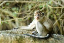 Free Monkey5 Stock Photography - 565852