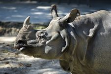Free Rhinoceros1 Stock Photography - 565862