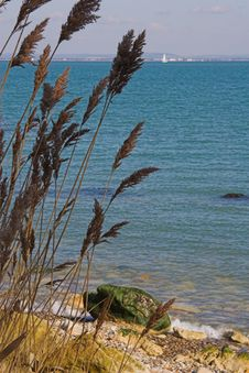 Seagrass With Beach & Sea Stock Image