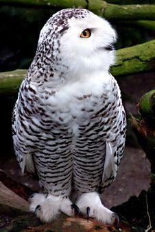 Free Bird Of Prey Stock Images - 566514