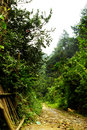 Free Tropical Rainforest Pathway Royalty Free Stock Photography - 5602407