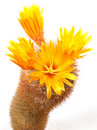 Free Prickly Plant With Flowers Stock Image - 5608151