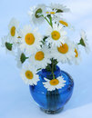 Free White Daisies Stock Photography - 5608902