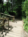 Free Stairs Down The Forest Royalty Free Stock Photography - 5609357