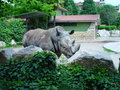 Free Rhinoceros 2 Royalty Free Stock Image - 5609856