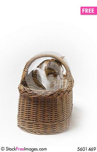 Free Kitten Royalty Free Stock Images - 5601469