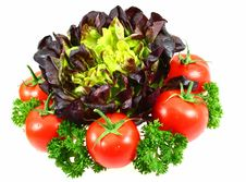 Free Fresh Salad With Tomatoes And Parsley Stock Photos - 5600243