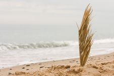 Free Reed At The Beach Stock Photo - 5600990