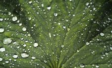 Free Rain-drops On Green Leaf Royalty Free Stock Photography - 5601247