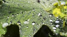 Free Rain-drops On The Green Leaf Royalty Free Stock Image - 5601336