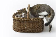 Free Kitten Royalty Free Stock Photos - 5601428