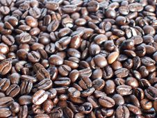 Free Coffee Beans Royalty Free Stock Photography - 5601457