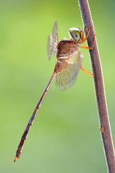 Free Dragonfly Stock Photo - 5601510
