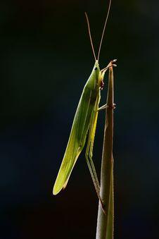 Free Lighting Bug Royalty Free Stock Photography - 5601707