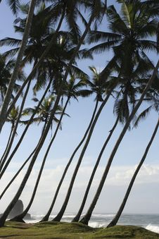Tropical Shore Royalty Free Stock Photography