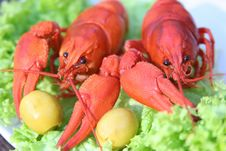 Free Lobster Stock Photos - 5602473