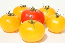 Free Tomatoes Royalty Free Stock Photos - 5603768