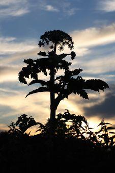 Free Umbel-late Plant Stock Photos - 5604683