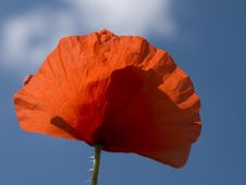 Free Poppy Stock Images - 5604844