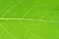 Free Leaf Royalty Free Stock Photography - 5604877