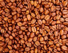 Free Coffee Beans Stock Photography - 5605012